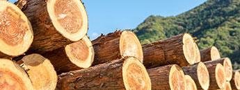 合板・木質建材